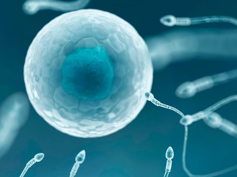 sperm quality and ivf success rates