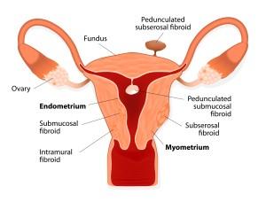 FemaleReproductiveSystem